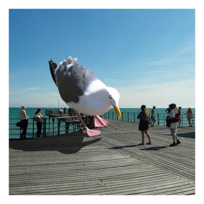 Large Gull Bognor Regis Pier Card