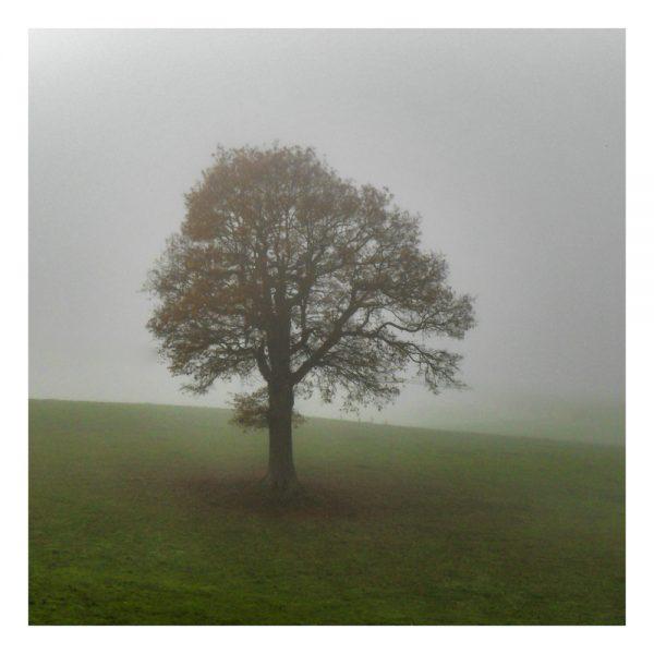 Misty Morning Tree Card