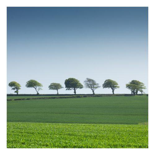 Trees Near Lyme Regis Dorset