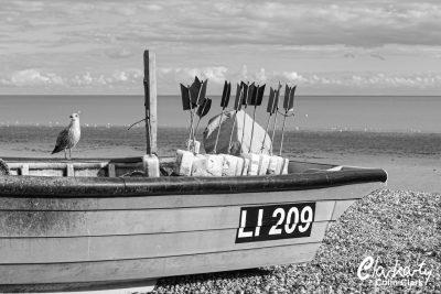 Gull on fishing boat