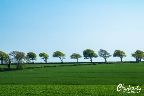 Trees on a hill in Dorset