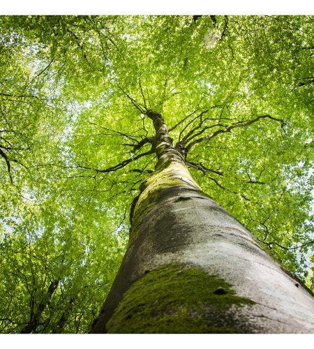 Tree Canopy Card